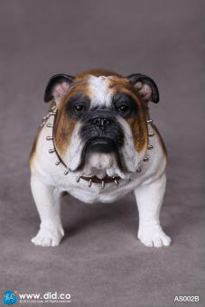 British Bulldog (Brown White) 1/6