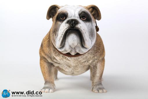 British Bulldog (Light Brown ) 1/6